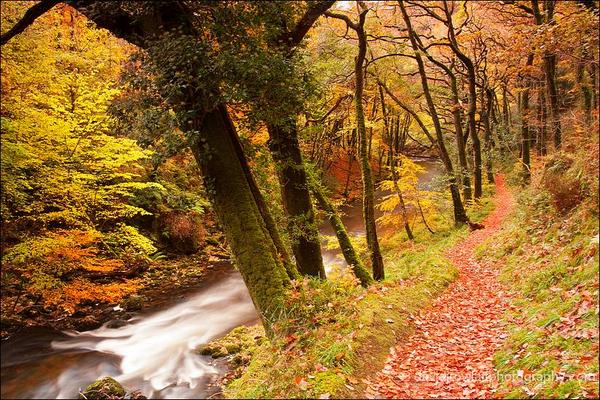 Autumnal walk beside the East Lyn. By Dave Rowlatt  http://www.davidjrowlattphotography.com/