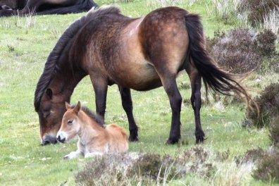 Mare and Foal. By Peter French. http://www.flyingtigers.co.uk/