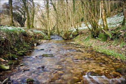 207 Dave Rowlett Snowdrop Valley