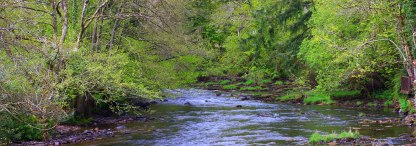 The River at Dulverton by Peter French www.flyingtigers.co.uk