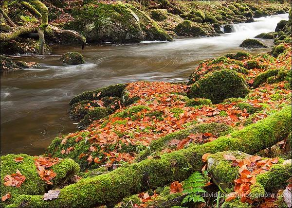 A clash of colour on the East Lyn by Dave Rowaltt A clash of colour down the East Lyn... #Exmoor by Dave Rowlatt http://www.davidjrowlattphotography.com/