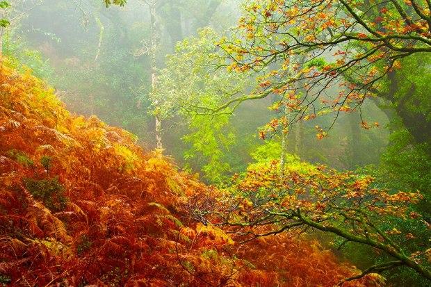 Exmoor Rain Forest (Robert Hatton)