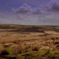 A Wild Exmoor Landscape by Peter French