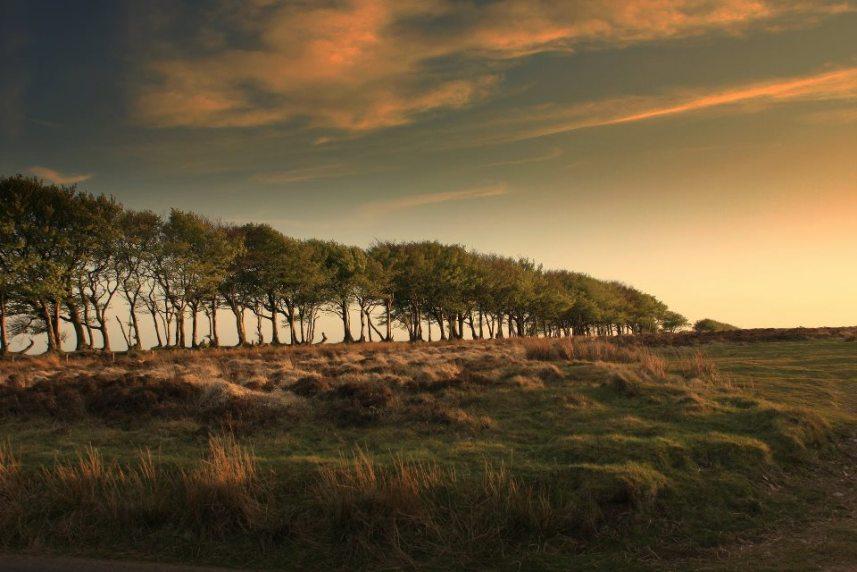 Exmoor's Evening Light (Peter French)