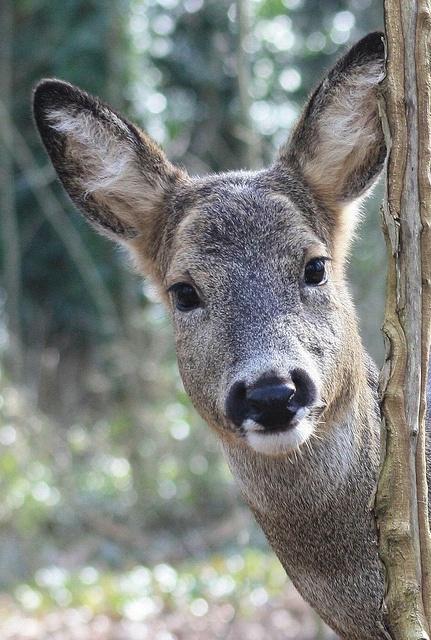 Peek-a-boo! Photo by Jochen Langbein