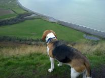 Bailey overlooking Bossington by CottagePorlock
