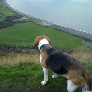 Bailey overlooking Bossington by CottagePorlock