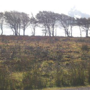 Trees on Exmoor by Melanie Maddocks