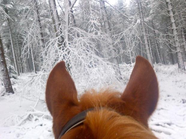 Exmoor on Horseback 1