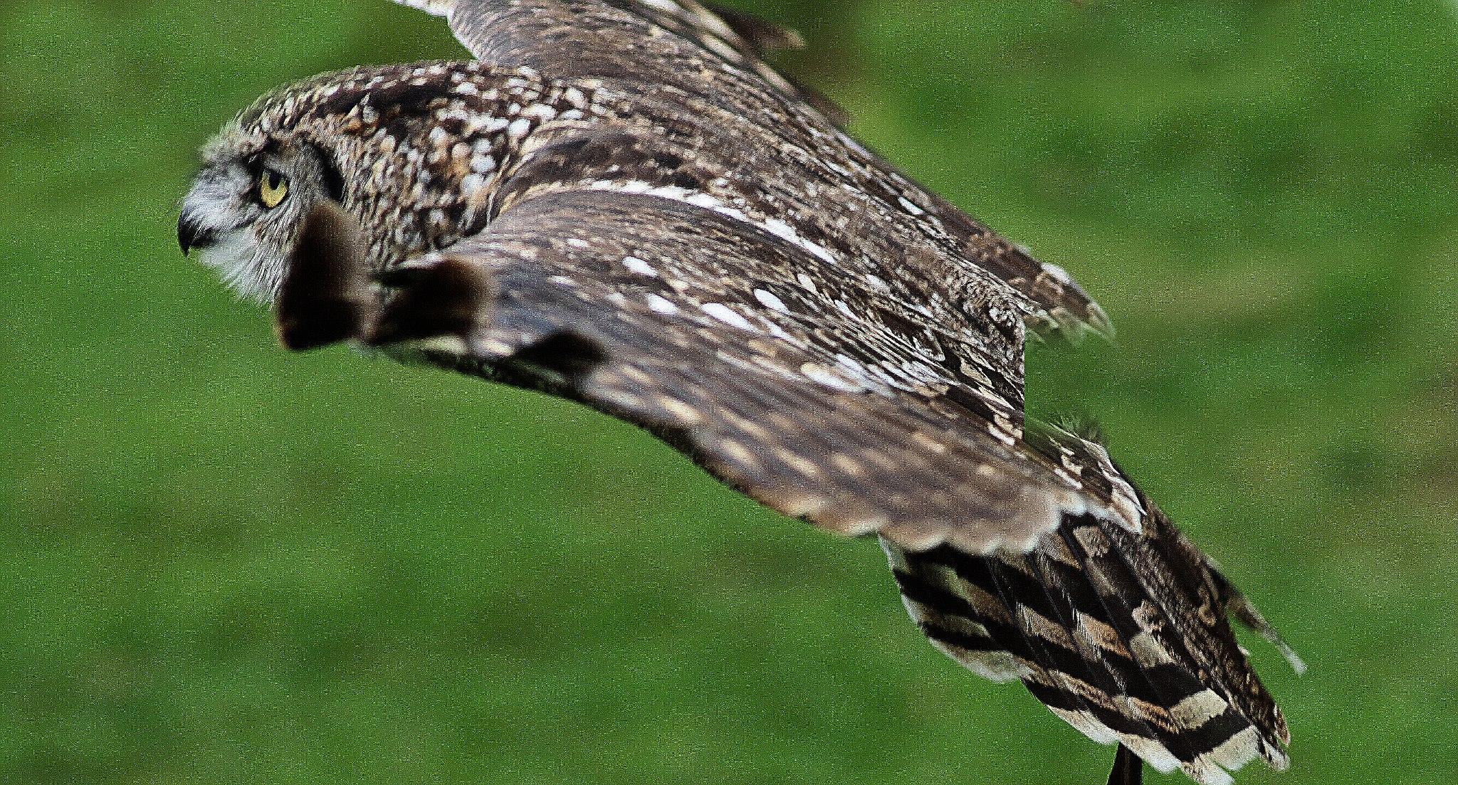 birds of prey - Exmoor 4 all