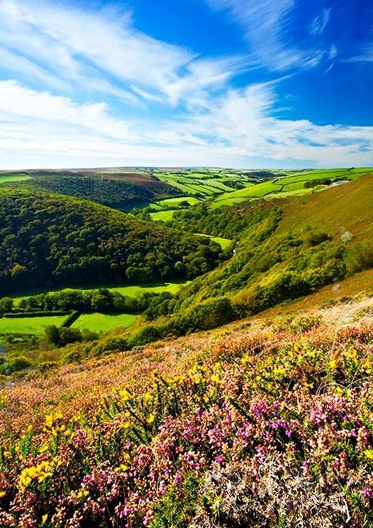 Summer on Exmoor. By Rob Hatton