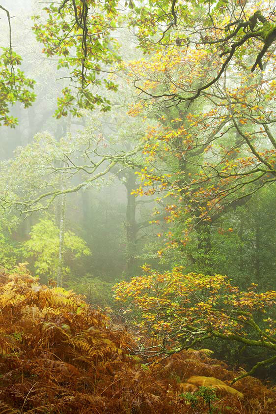 Horner Woods in Autumn 2013. Photo by Rob Hatton