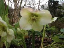 Greencombe Garden