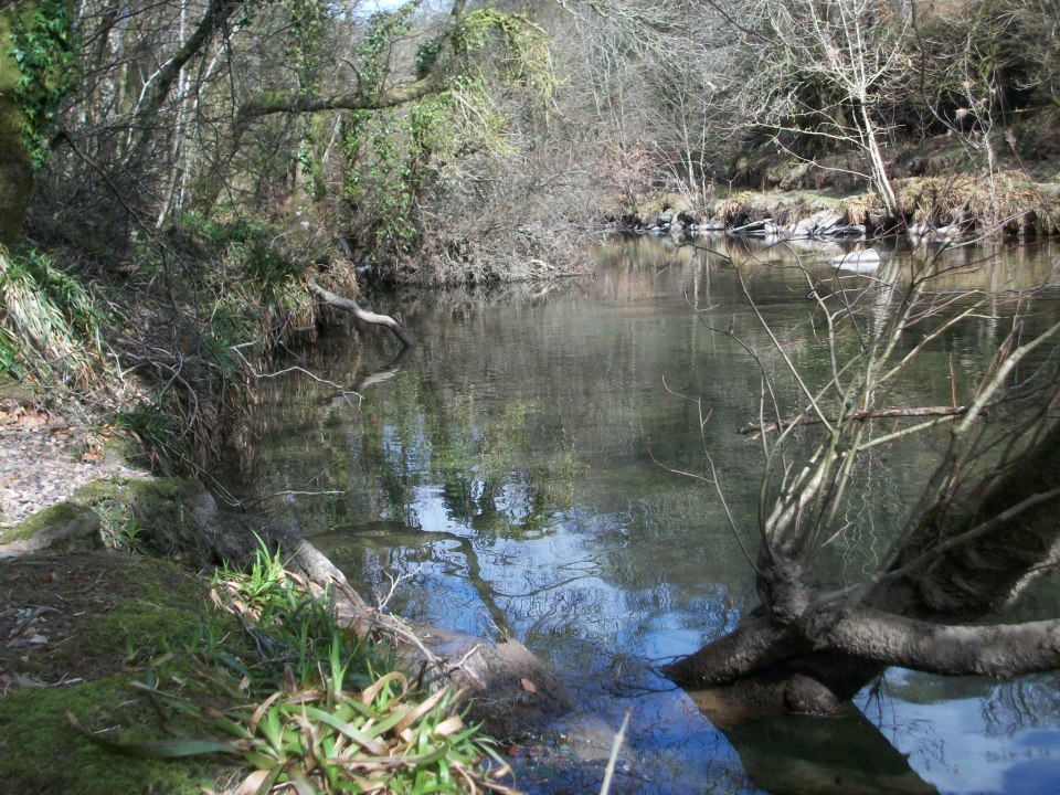 The River Barle looked calm and serene. Photo by Bert Bruins