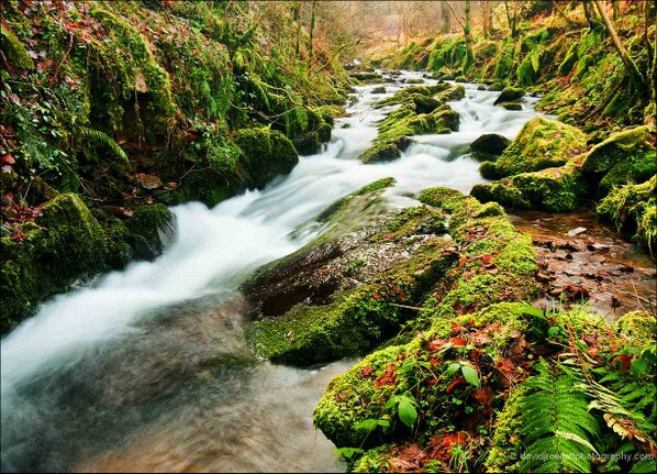 The East Water rapids running through Horner Woods. Photo by Dave Rowlatt