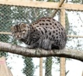 fishing cat 4
