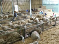 Open Day at Borough Farm