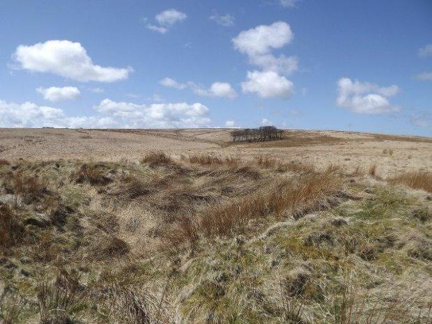 103 Exmoor Mires Landscape