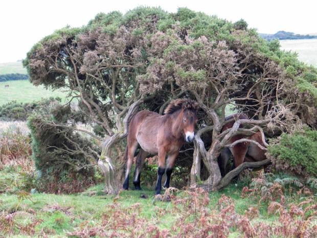 A local from Exmoor casually standing in his front porch... Photo by Experience Exmoor