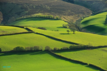 Photo by Andy Farrar (www.andyfarrar.co.uk)