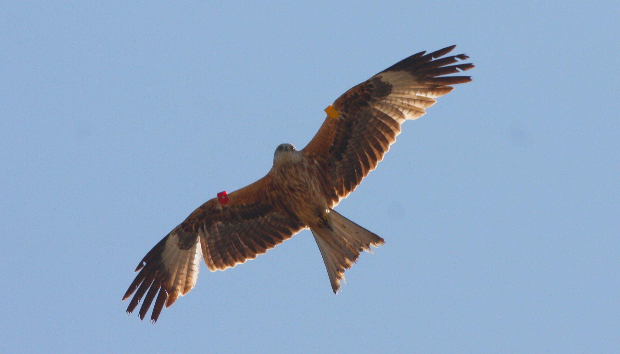 Birds Of Prey Exmoor 4 All