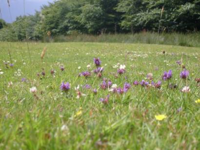 304 Darren Jones Meadow