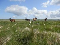 4 stallions