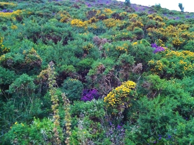 The Colours of Exmoor