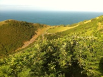 Foreland Point 5