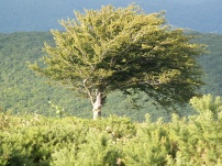 The Lonesome Tree 3