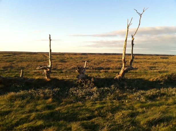We were trees 1