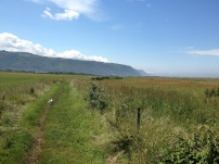 A Walk Through The West Porlock Marshes, part 2 1