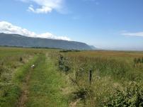 A Walk Through The West Porlock Marshes, part 2 1