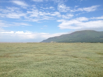 A Walk Through The West Porlock Marshes, part 2 2