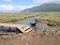 A Walk Through The West Porlock Marshes 2