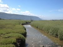 A Walk Through The West Porlock Marshes, part 2 3