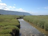 A Walk Through The West Porlock Marshes, part 2 3