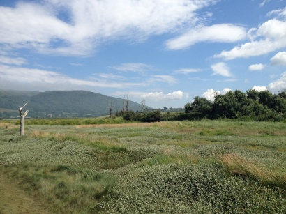 A Walk Through The West Porlock Marshes 4