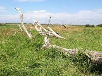 A Walk Through The West Porlock Marshes, part 2 6