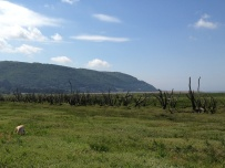 A Walk Through The West Porlock Marshes 5