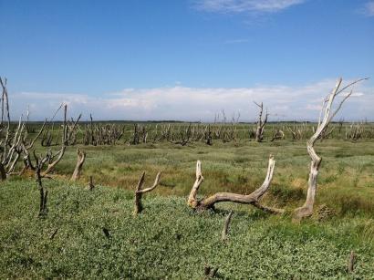 A Walk Through The West Porlock Marshes 6