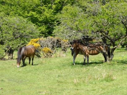 Horse Power 1