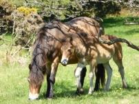 Horse Power 2
