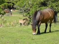 Horse Power 5