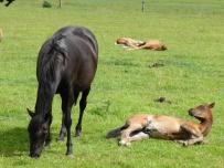 Horse Power 6