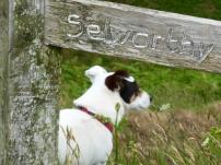 Exmoor Signs, part 3 5