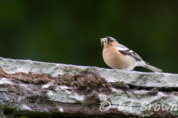 Wildlife of the Exe Valley, Somerset