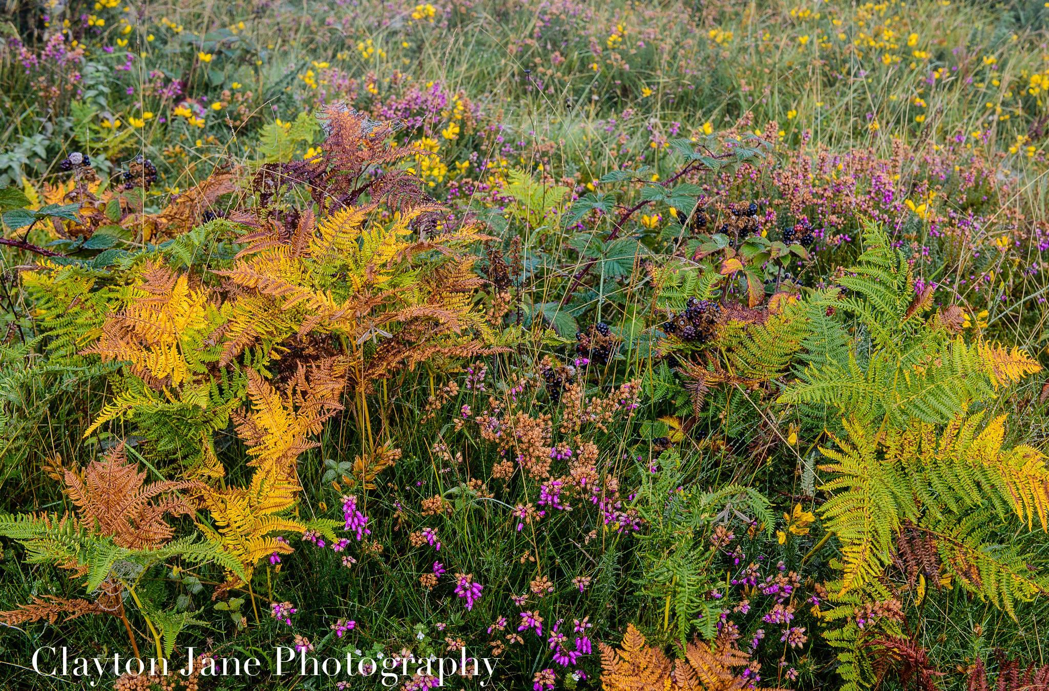 Photo by Clayton Jane www.claytonjane.co.uk