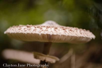 302 Clayton Jane Mushroom