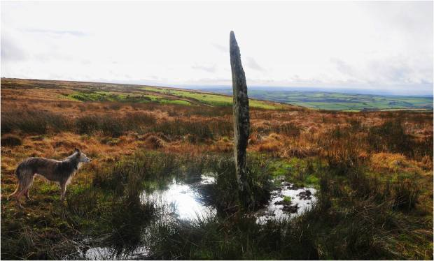 Photo by www.twitchen.co.uk